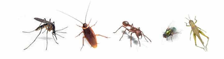 ปัญหายุงลาย แมลงวัน แมลงสาบ และแมลงอื่น